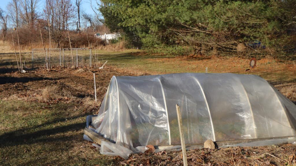 A view of our yard showing a row cover sheltering parsley in the winter