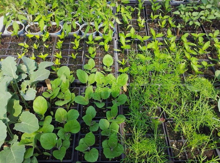 Variety of starter plants ready to plant in the garden