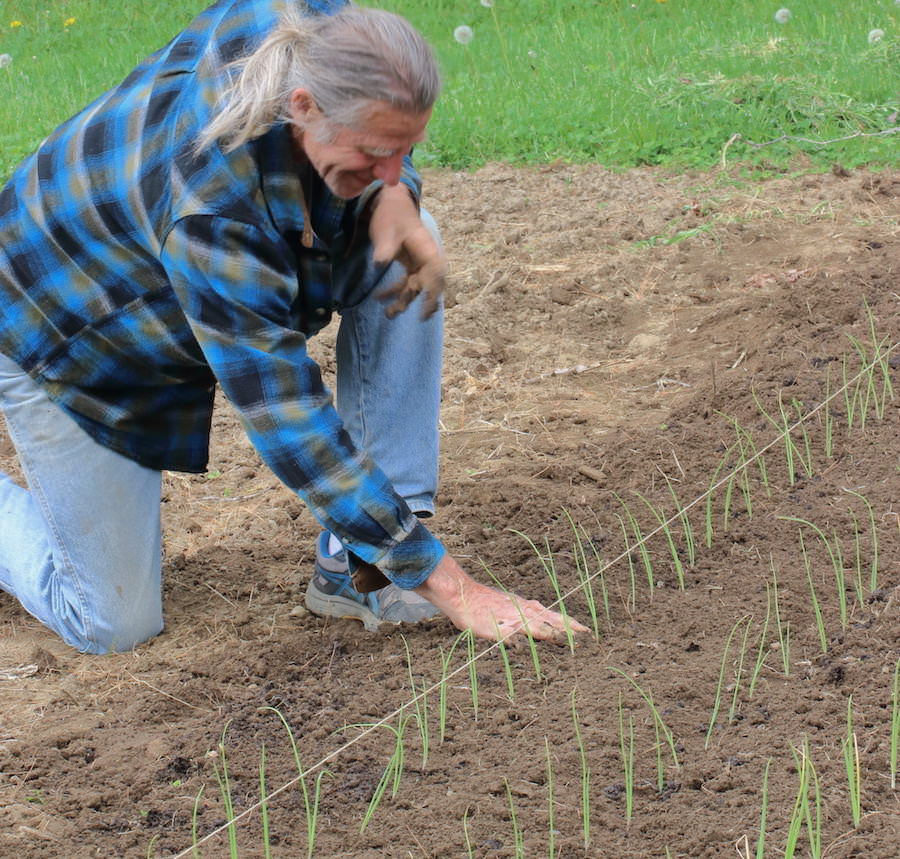 Jamie planting onion seedlings in garden
