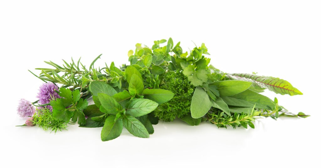 Various herbs displayed on plain background