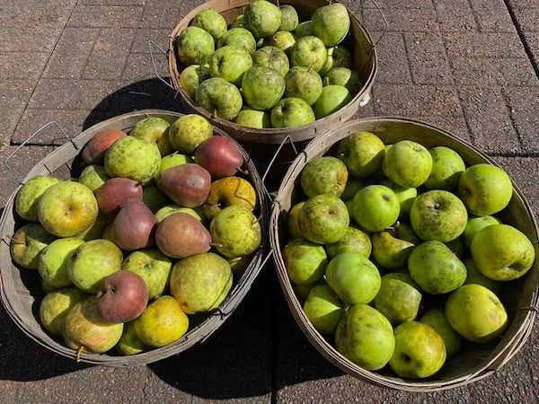 Three half bushels of apples